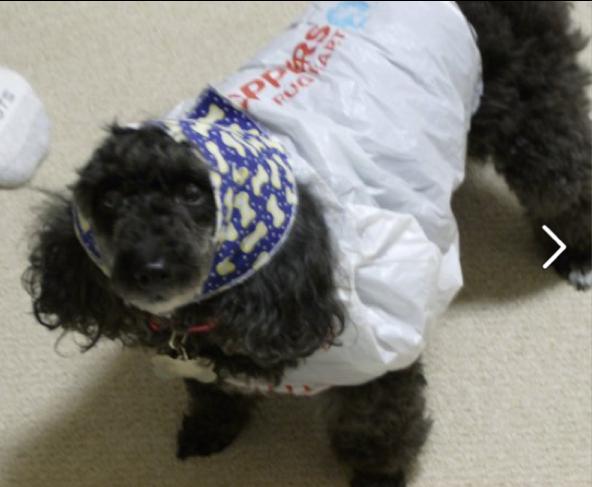 lacey raincoat