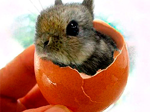 101-Cute-Easter-Bunny-Pictures-Adorable