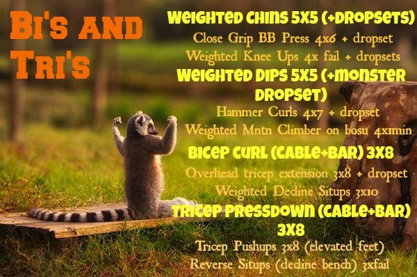 cute-animals-flexing-lemur