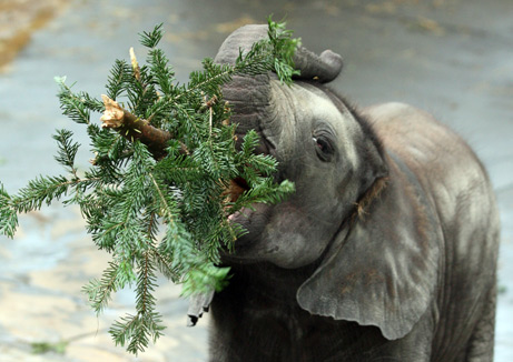 elephant_tree.jpg