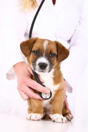 veterinarian-job-description.jpg