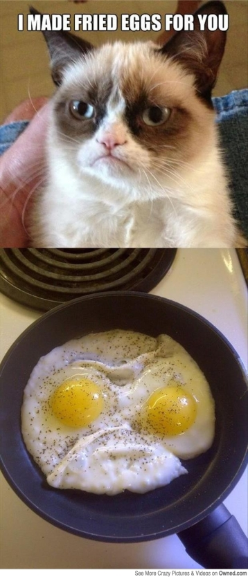 my_eggs_seem_to_be_grumpy_big.jpg